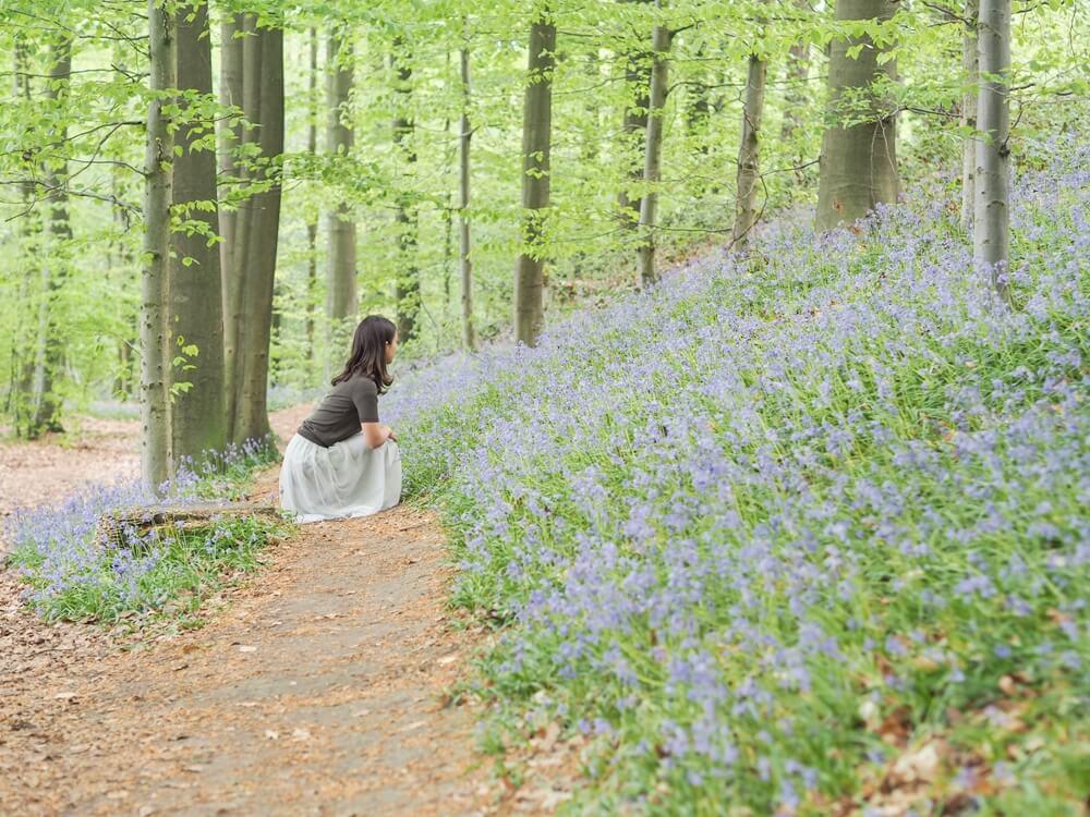 【春のベルギー】お花の絨毯を見に「ブルーベルの森」へ